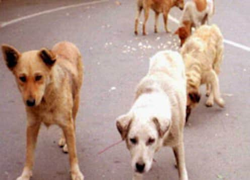 Rabies kills 19,000 Indians annually