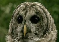Rumour sparks owl hunt in N India