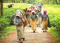 Bengal tea garden workers in dire straits