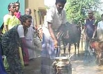 Tamil Nadu celebrates the cow on Maattupongal