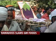 Genetically modified food, a hot potato for the Govt