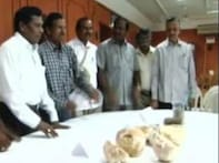Watch: Tamil geologists discover biggest dinosaur eggs