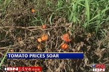 Floods in Punjab, Haryana push up tomato price