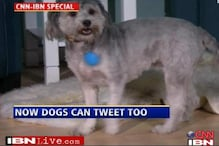 Now follow your dog on Twitter