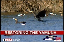 Scientists try to restore Yamuna's ecosystem