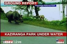 Kaziranga: Assam floods endanger wild animals