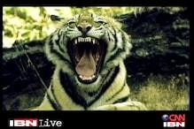 Karnataka: Cause of 4-year-old tiger's death still uncertain
