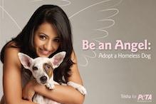 A big no to animal cruelty: Trisha Krishnan