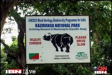 Rhino shot dead by forest guards