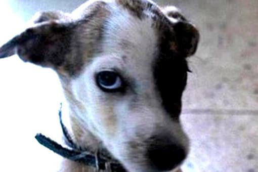 French court summons dogs as witnesses in a murder trial