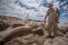 Fossil found during New Mexico bachelor party is 10 million years old