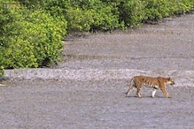 Exclusive: How India is managing its tiger reserves