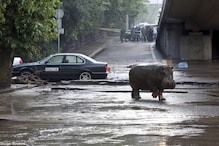 Police hunt escaped zoo animals after floods in Georgian capital