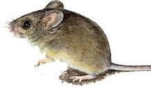 Andhra Pradesh: 10 day old baby dies after being bitten by rats in hospital