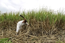 Economic Survey: Agriculture sector needs transformation to ensure sustainable livelihoods for farmers, food security