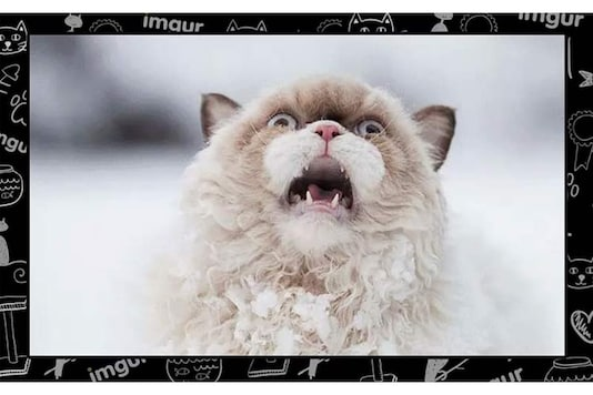 See: Imgur's top 15 most viral cats for 2015