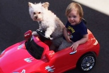 Pet Dogs May Help Cut Stress In Kids: Study