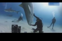 Watch: Stunt diver trains a ton shark to spin on the palm of his hand
