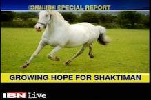 Rider feels the agony of horse 'Shaktiman'