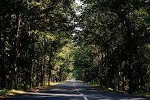 Gujarat Govt To Plant 10-cr Trees During 67th 'Van Mahotsav': Minister