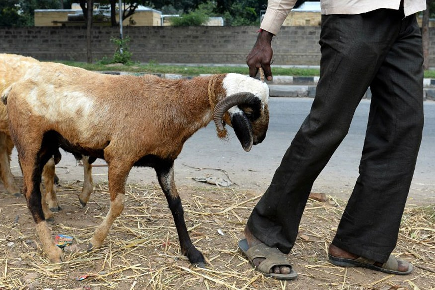 Pregnant Goat Dies After Being Raped by 8 Men in Haryana's Mewat