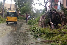 In Pics: A Day After Cyclone Vadrah Makes Landfall, Chennai Battered