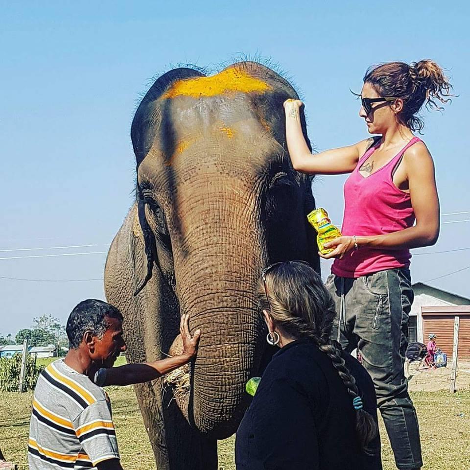 Floriane Blot treating elephants with turmeric. (News18)