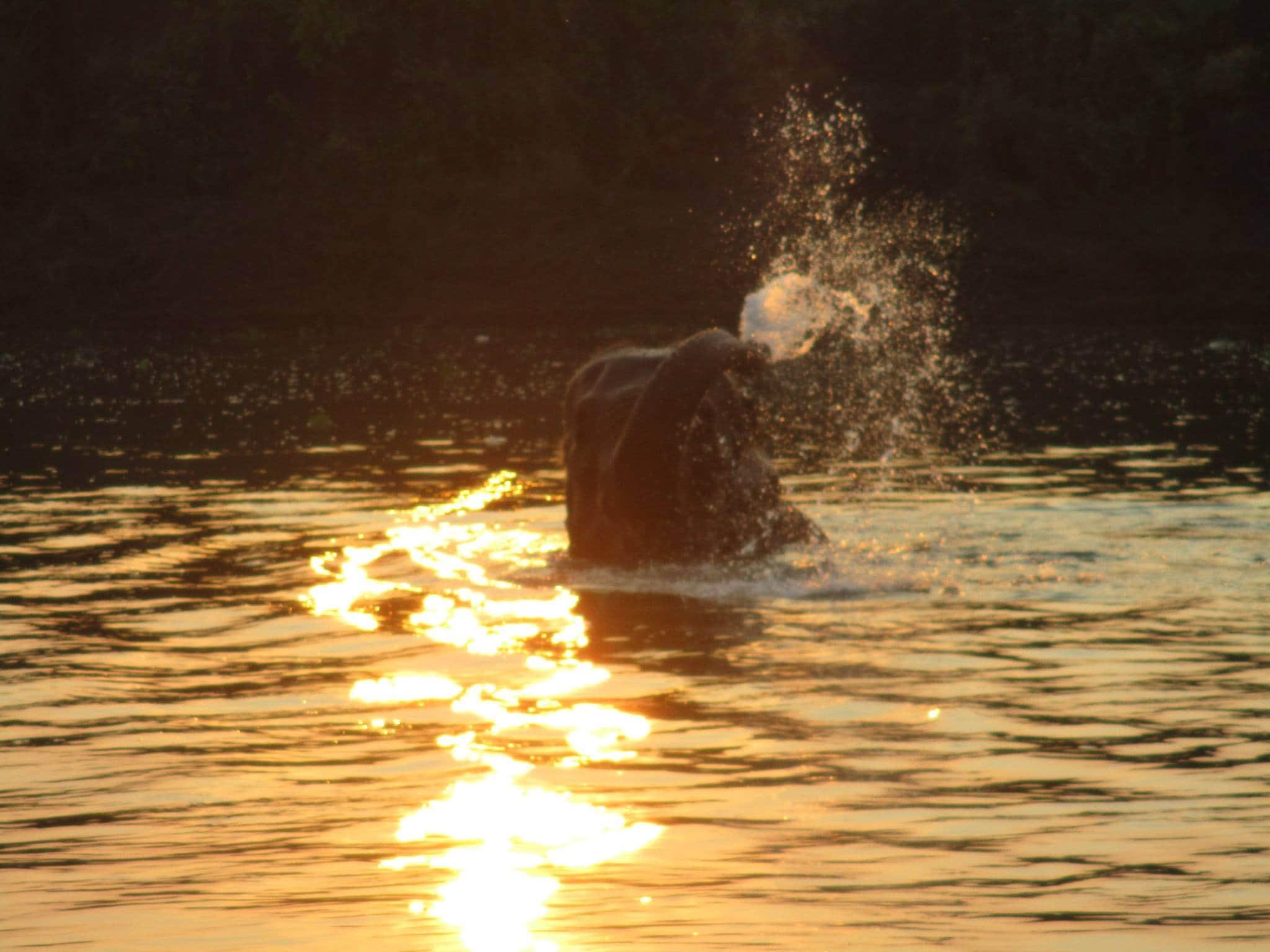 Elephant bathing in Rapti river, Chitwan. (News18)