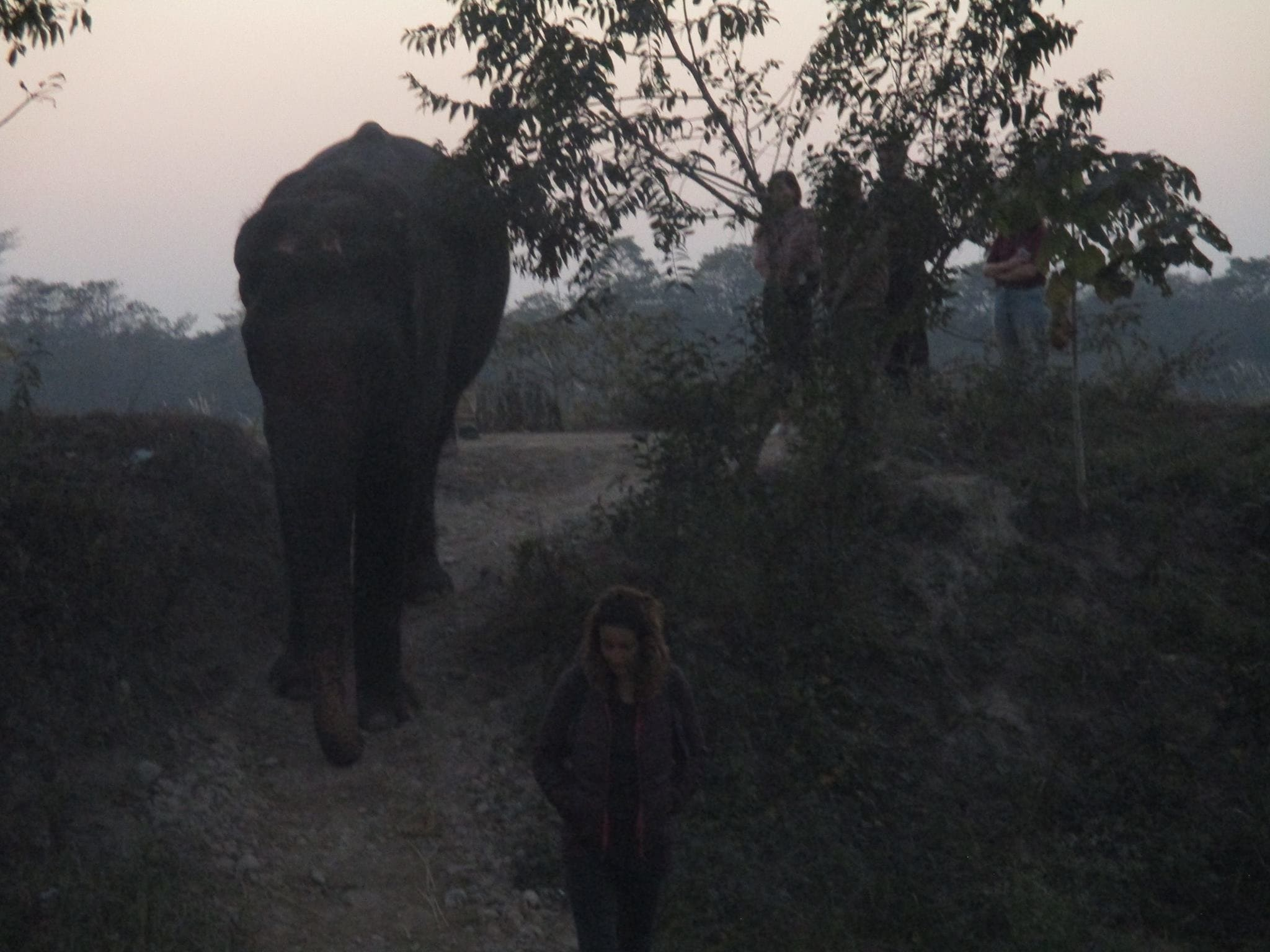 An elephant walk with Santikali, a 60-year-old jumbo, in Chitwan National Park. (News18)