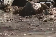 Watch: Oil Spill Off Chennai's Ennore Port Continues To Pose A Grave Threat To The Marine Life