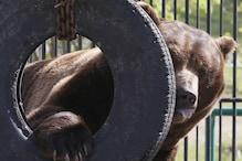 Bear Witness: Boy Rescued From Woods Says Friendly Ursine Kept Him Safe