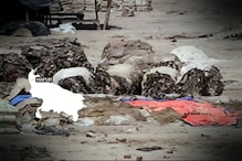 Watch: Meat Crackdown Blitz Hurts leather Industry