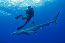 US Swimmer Dies From Suspected Shark Attack: Police