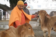 UP Engineers Given Ropes, Told to Keep Stray Animals Away from Roads During CM Yogi's Visit