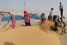 Govt Hikes Wheat MSP by Rs 85 Per Quintal; Pulses Up to Rs 325/qtl