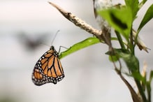 Delhi Homes 66 new Butterfly Species, Some Rare Ones Spotted This Year