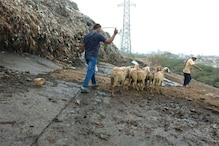 Life-or-death situation: A Day in Delhi Slaughterhouse After the 'Ban'