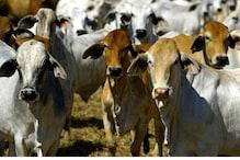 Jharkhand Govt Dismisses Cow Vigilantism as 'Stray Incidents'