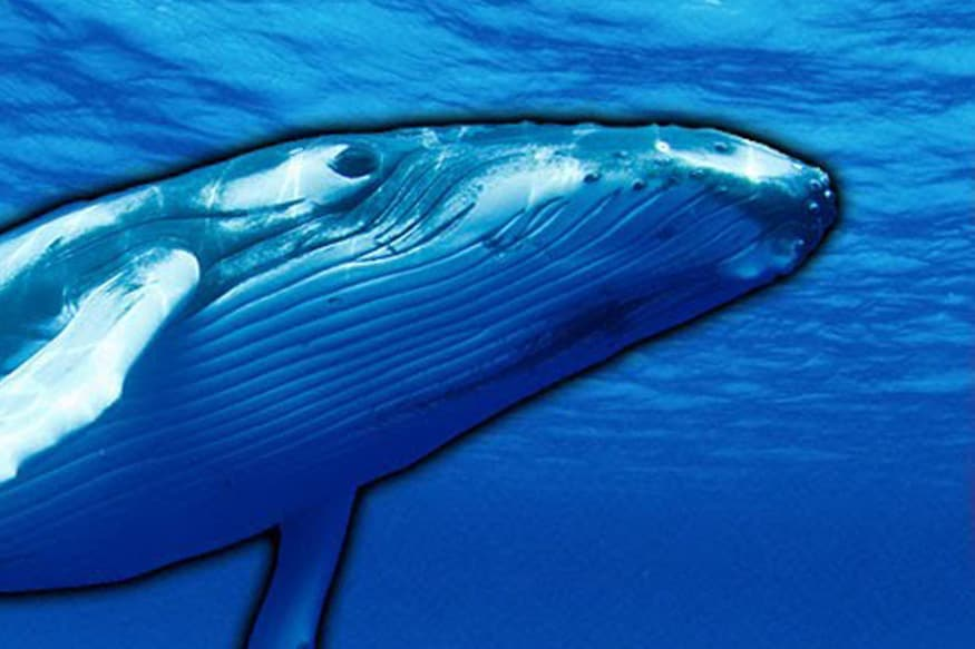 Blue Whale Game: Fortis Launches 24x7 Helpline
