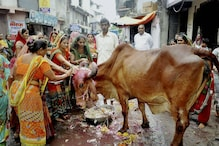 Soon, You Can Buy Cow Urine, Dung-based Soaps, Face Packs on Amazon
