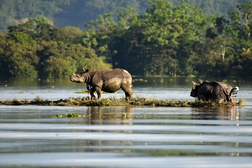 (The sanctuary hosts two-thirds of the world's one-horned rhinoceros.)