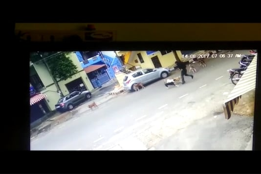 CCTV footage showing stray dogs attacking a woman in Bengaluru.