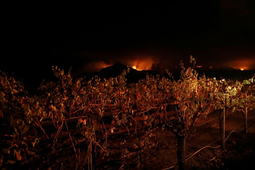 Vines are seen at a vineyard during the Nuns Fire in Kenwood, California (REUTERS)