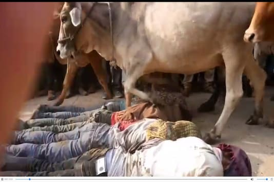 A video grab of the ritual in Ujjain shows cows running over the villagers.