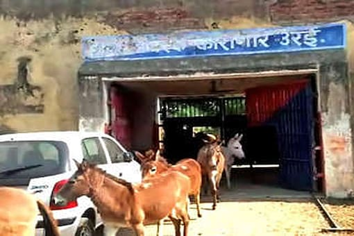 Officials said the donkeys destroyed plants worth Rs 2 lakh. (Photo: CNN-News18)