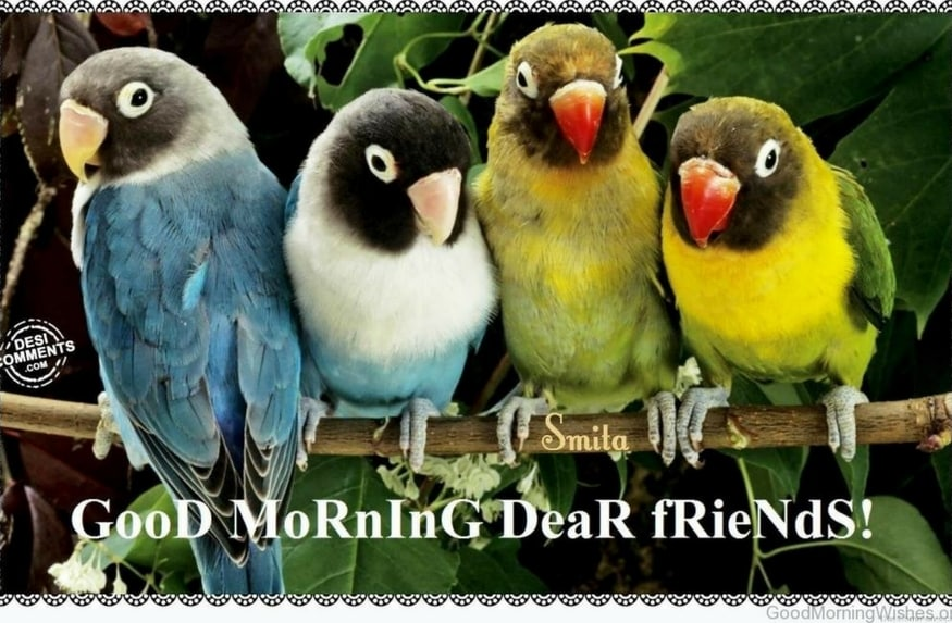 Good morning images with birds quotes for whatsapp in urdu