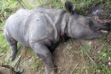Poachers Kill Rhino After it Strays From Kaziranga National Park, Escape With Horn
