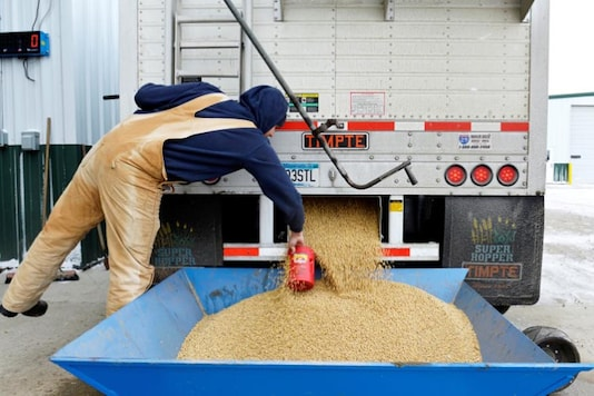 Representative image: A worker takes a sample from an incoming truckload of soybeans. (File Photo/Reuters)