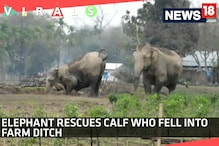 Watch: Elephant Rescues Calf Who Fell into Farm Ditch