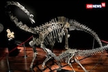 Watch: Dinosaurs on Auction in Paris
